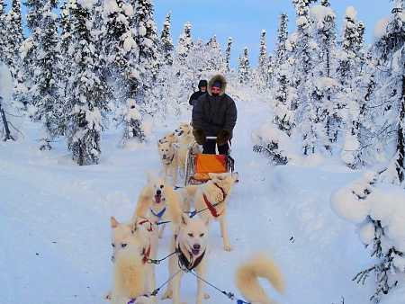 huskies sled dogs
