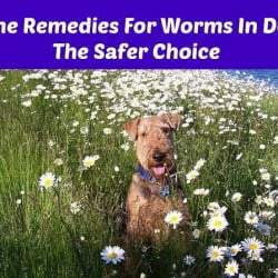 Home Remedies For Worms In Dogs - The Safer Choice?