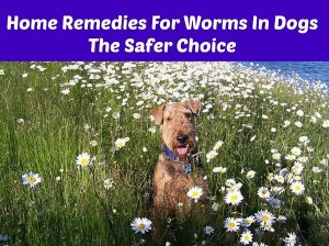 Home Remedies For Worms In Dogs The Safer Choice