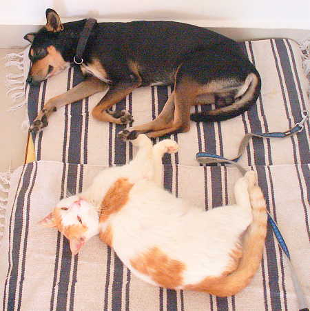 5 Purrfect & Pawsome Ways To Make Cat And Dog Friends