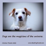 "10 ""Furbulous"" Picture Quotes And Poems About dogs."