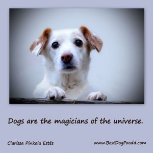 cute-dog-quotes