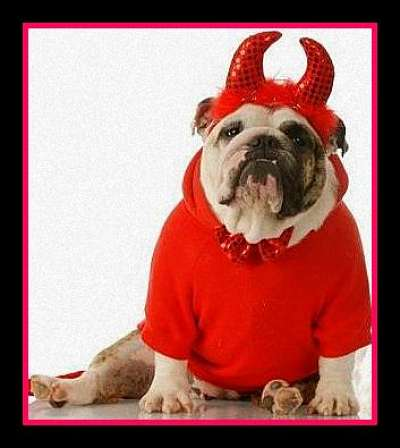 red devil dog costume
