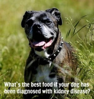 What is the best dog food for kidney disease?