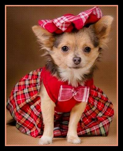 Scottish Dog Halloween Costumes