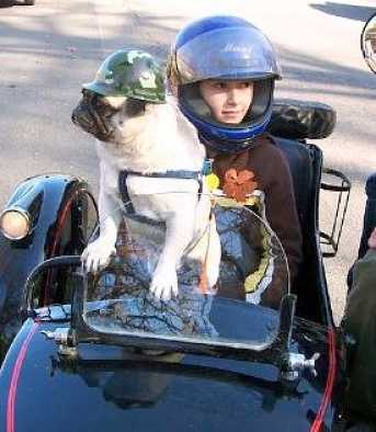 dog-in-a-sidecar-18