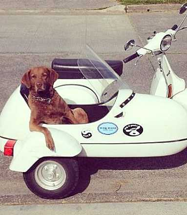 dog-in-sidecar-16