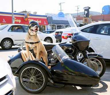 dog_sidecar_20