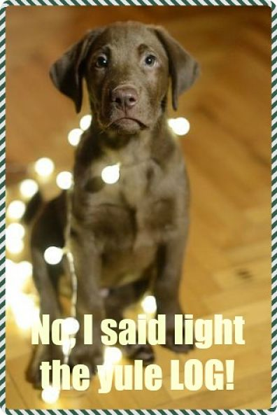 cute dog christmas meme
