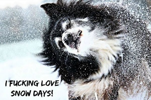 dog meme snow
