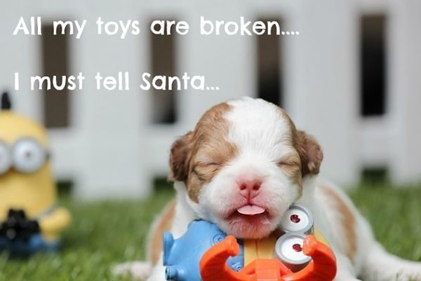 sweet dog christmas meme