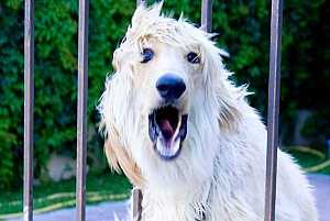 how-to-stop-dog-barking-image