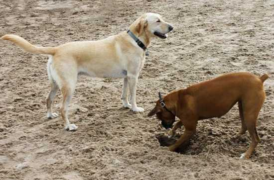 How To Stop Dogs From Digging And Dog's Rummage
