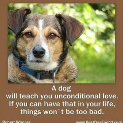 9 Tributes To The Dogs - Dog Sayings