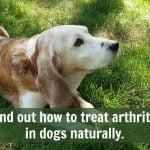 Best Natural Remedies for Dog Arthritis
