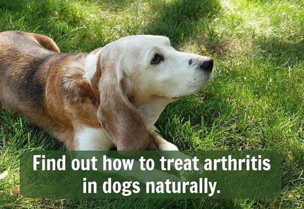 natural remedies for dog arthritis