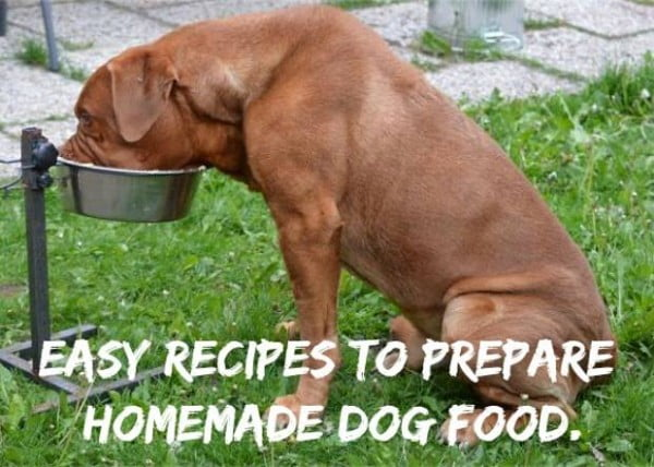 Homemade dog food recipes